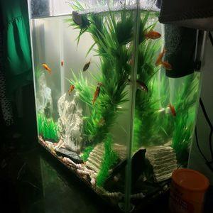 50gal Fish Tank Aquarium for Sale in Fresno, CA