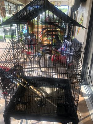 Love Birds and Cage for Sale in Odessa, FL
