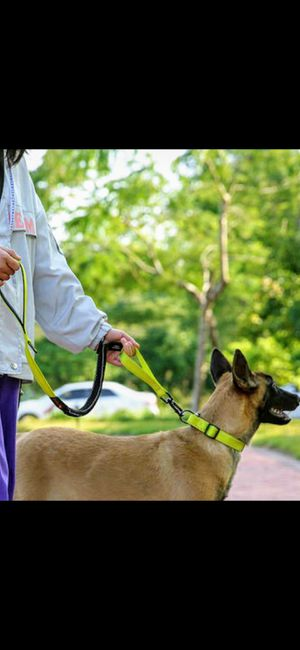 NEW!! Yellow Bungee Leash and Collar Set for Sale in Norwalk, CA