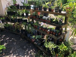 Plant Moving Sale (Potted Plants, Pots, and More...) for Sale in Bradenton, FL
