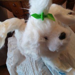 Little Stuffed Doggie for Sale in San Luis Obispo, CA