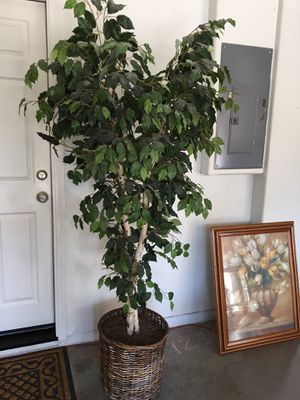 Artificial indoor Tree for Sale in San Leandro, CA