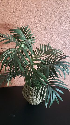 Fake plant for Sale in Las Vegas, NV