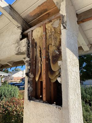 Bee Removal for Sale in Ontario, CA