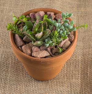 4-inch Succulent Aloe Pot for Sale in Las Vegas, NV