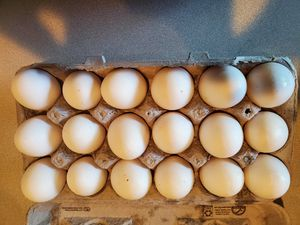 Farm fresh eggs for Sale in Graham, WA