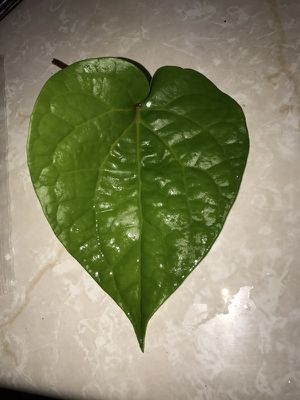 Peppermint Leaf/Pupulu leaf for Sale in Kailua, HI