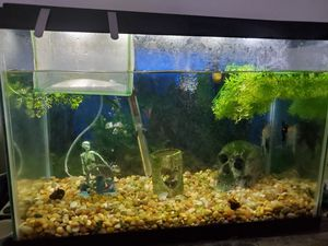 Complete 20 gallon set up for Sale in Virginia Beach, VA
