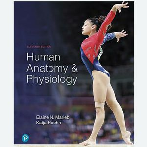 Human Anatomy and Physiology 11th ed by Elaine Marieb and Katja Hoeh 9780134580999 A&P eBook PDF Free instant Delivery for Sale in Ontario, CA