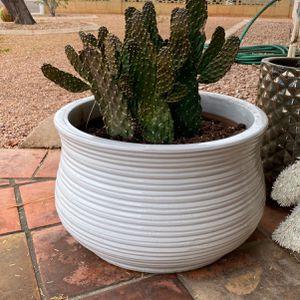 Pot + Cactus for Sale in Tempe, AZ