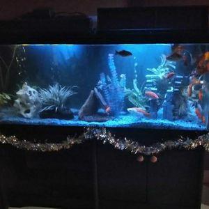 70 GALLON FISH TANK.INCLUDING ALL THE FISH, DECOR.ETC for Sale in Corona, CA