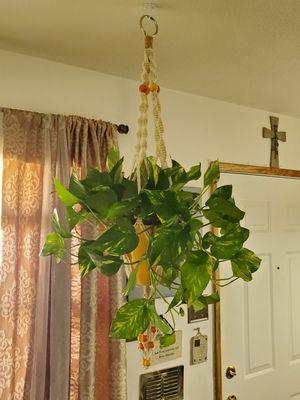 Plant Hanger w/or w/o Plant ((Please Read Full Description)) for Sale in Phoenix, AZ