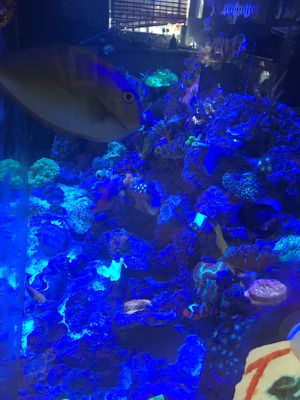 Aquarium saltwater & fresh water. equipment available for Sale in Los Angeles, CA