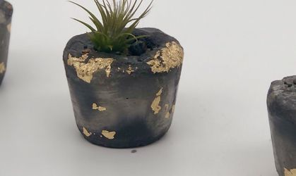 Set of 3 mini decorative concrete pots gold accents including miniature air living plant. for Sale in Gainesville,  VA