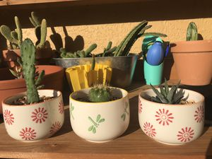 Plants - Cactus-Succulents for Sale in Orlando, FL