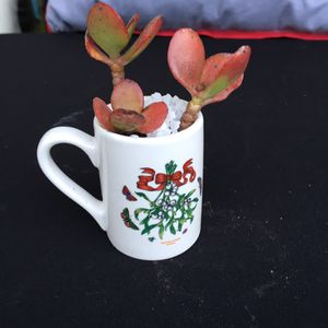 Assorted Baby succulents in little coffee cups 10$ each for Sale in Palo Alto, CA