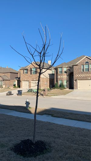 2 trees .... free for Sale in Fort Worth, TX