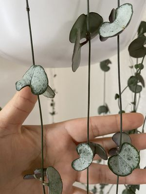 String of Hearts Silver Glory for Sale in Turlock, CA