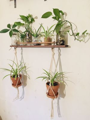 Handmade Wall Shelf with Plants for Sale in Brooklyn, NY