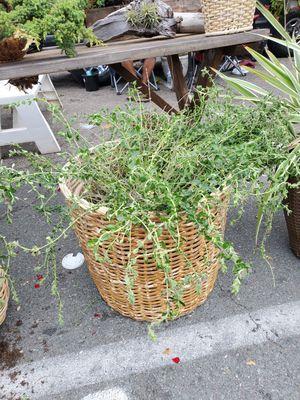 Flowering Baskets! Plants! Plants! for Sale in San Diego, CA