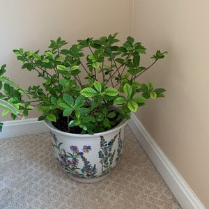 Pot&plant for Sale in Lorton, VA