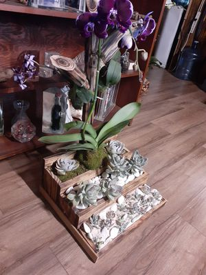 Succulent and orchid plants for Sale in Pembroke Pines, FL