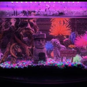 Brand New GLO-FISH TANK for Sale in Fresno, CA