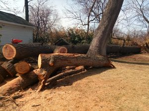 Free Red Oak fire wood for Sale in Silver Spring, MD