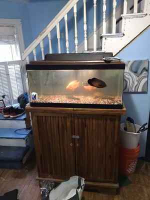 40 gallon tank with fish, filters and all accessory's bar not for sale 200 or best offer for Sale in Winthrop, MA
