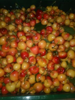 Rainier Cherry De Hoy 18 lbs for Sale in Stockton, CA