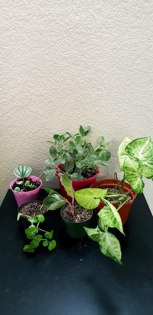 5 live plants for Sale in Chandler, AZ