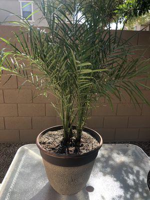 Natural interior plant for Sale in Phoenix, AZ
