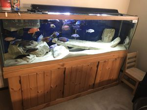 135 gal complete setup. Everything must go for Sale in Peoria, IL