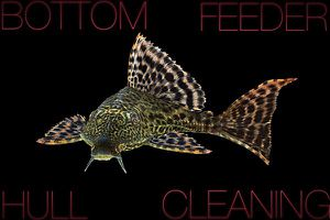Bottom Feeder Hull Cleaning for Sale in Tampa, FL