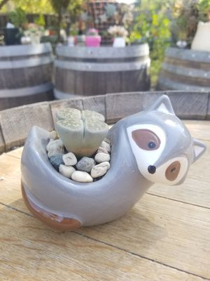 Lithops and Raccoon planter for Sale in Gilroy, CA