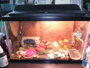 4 hermit crabs for Sale in Philadelphia, PA