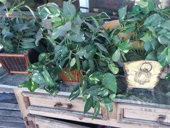 20 Dollars Fake Plants for Sale in Fort Lauderdale,  FL