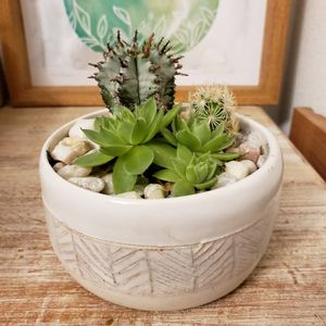 Cactus and succulent in unique, Herringbone, white, ceramic planter. About 4 inches in diameter and 2 in. Tall. for Sale in Hillsboro, OR
