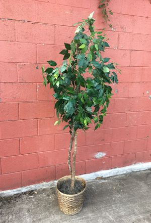 "Potted flower plant 5ft 6"" for Sale in Duluth, GA"