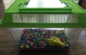Hermit crab or beta fish tank for Sale in Durham, NC
