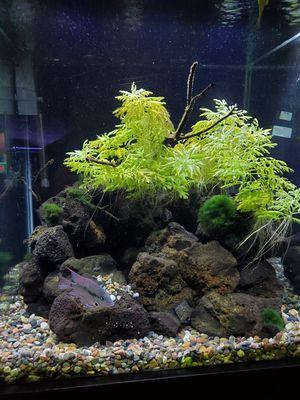 Aquarium for Sale in Murrieta, CA