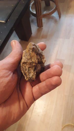 Meteorite for Sale in Bartow, FL