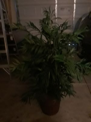Artificial plant for Sale in Woodland, CA