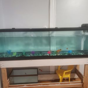 75 gallon fish tank table included for Sale in Lynn, MA