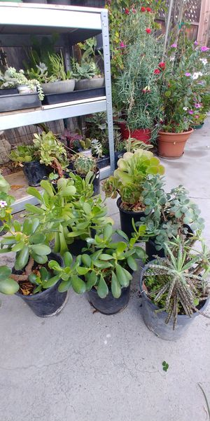 Succulent plants for Sale in Anaheim, CA