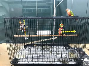 Bird cage for sale great for small parrot for Sale in Miramar, FL