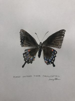 Orinignal Signed Butterfly Watercolor Painting for Sale in Wichita, KS