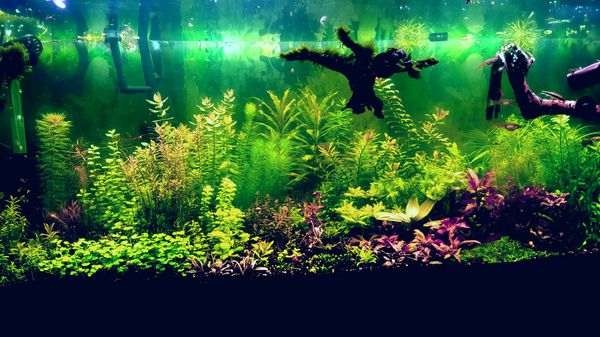 Aquarium plant packs