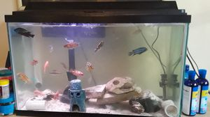 29 GALLON FISH TANK for Sale in Queens, NY