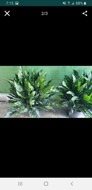 Large emerald beauty's for Sale in Clinton, MD